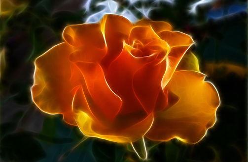 Обои Фрактальная роза, by Placi1