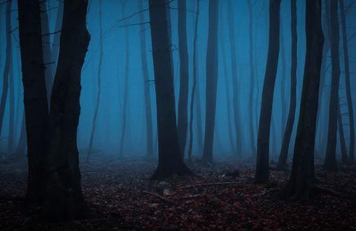 Обои Осенний лес в тумане, by erynlasgalenphotoar