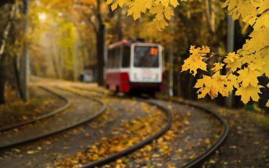 Обои Электричка следует по маршруту, железнодорожные пути осыпаны желтыми листьями, на переднем плане ветка с листвой