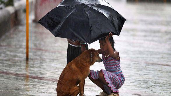 Обои Мальчик с девочкой и собакой под дождем во время дождя