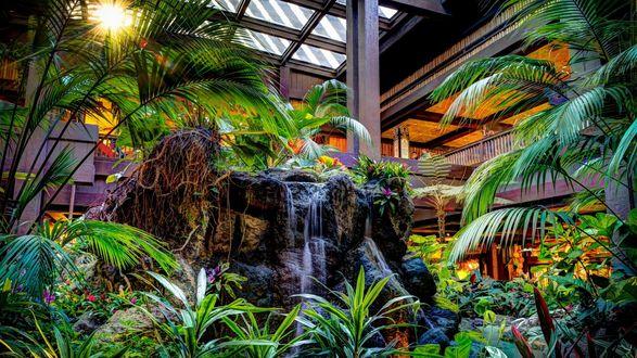 Обои Оранжерея с тропическими растениями