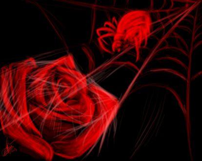 Обои Роза в паутине и паук, by k8-Yy