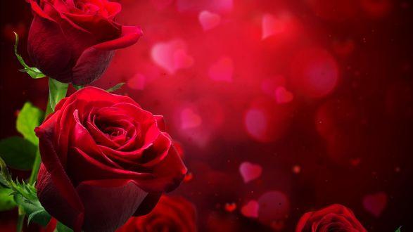 Обои Красные розы на фоне с сердечками