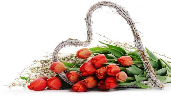 Обои Букет красных тюльпанов в сердце, сплетенном из веток