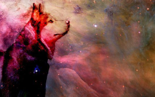 Обои Силует сибирской хаски в красных тонах в космическом пространстве