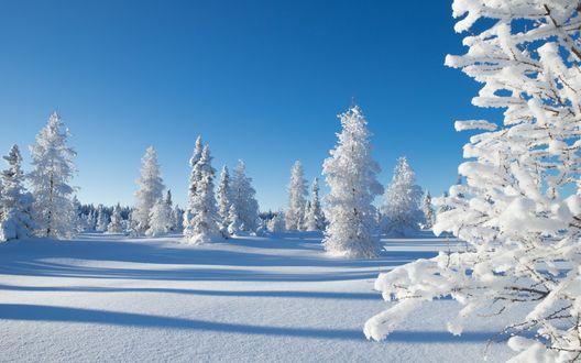 Обои Зимний пейзаж. Деревья покрытые снегом, на фоне голубого неба