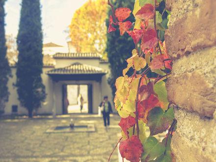 Обои Тихий дворик в городе Гранада, Испания, by Maria Bellet