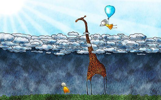 Обои Жирафу дождь не страшен, жираф дождь не видит