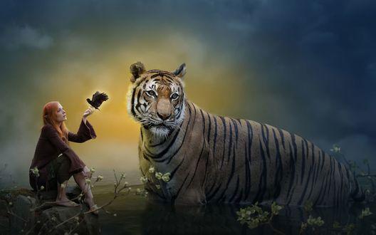 Обои Большой тигр стоит в воде рядом с эльфийкой сидящей на камне с птицей