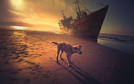 Обои Собачка на песчаном берегу на фоне заката, позади затонувший корабль