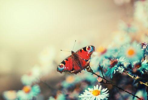 Обои Бабочка на цветах, by CliffWFotografie