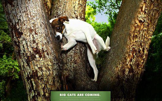 Обои Храбрый пес притаился между стволов большого дерева в ожидании больших кошек