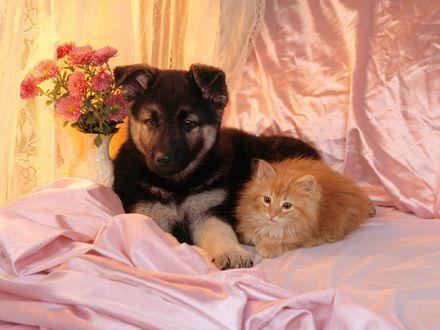 Обои Собачка и рыжий котенок лежат на кровати, рядом стоит ваза с цветочками