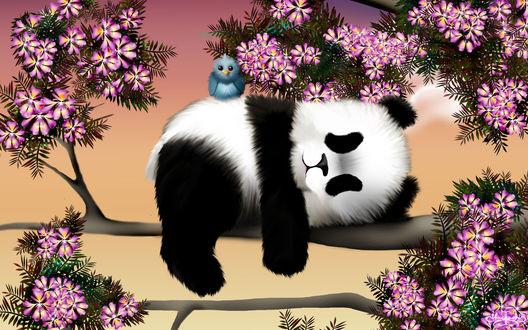 Обои Панда с птичкой на весеннем дереве, by Hazey1988