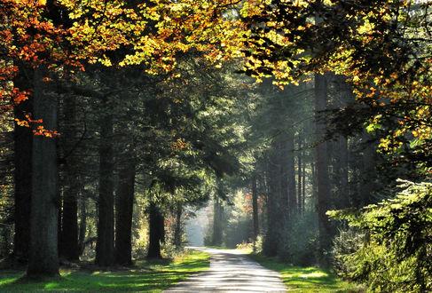 Обои Дорога в осеннем парке в солнечный день