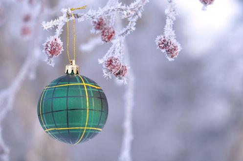 Обои Висящий на ветке с замерзшими ягодами новогодний елочный шар