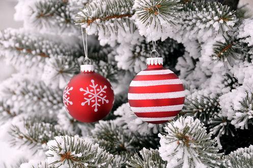 Обои Красно-белые новогодние шарики на заснеженной елке