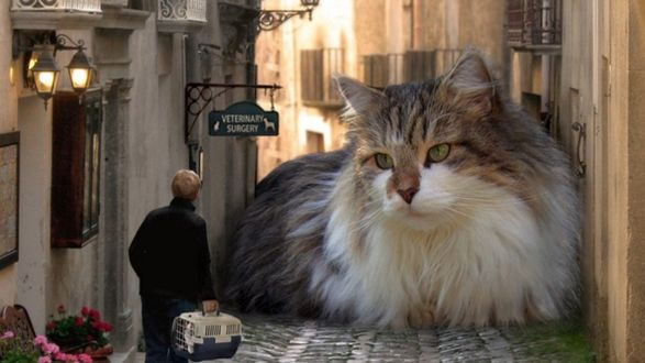 Обои Мужчина смотрит на гигантского кота перекрывшего дорогу