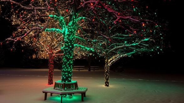 Обои Деревья в светящихся новогодних гирляндах