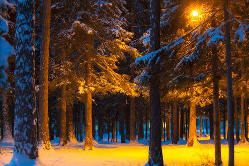 Обои Деревья в зимнем парке