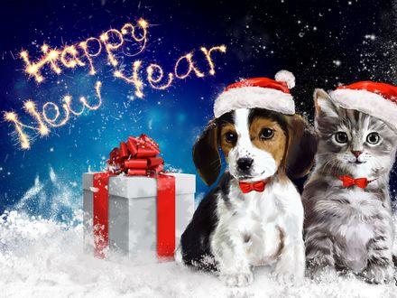 Обои Щенок и котенок в новогодних шапочках сидят на снегу возле подарка (Happy New Year / Счастливого Нового Года)