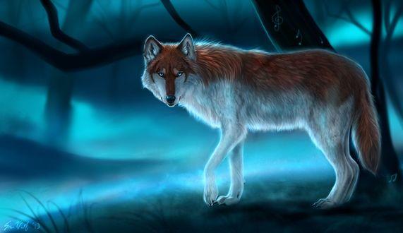 Обои Волк на фоне туманного леса, by Starcanis