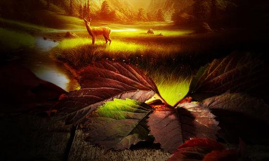 Обои Осенние листья и олень на заднем фоне