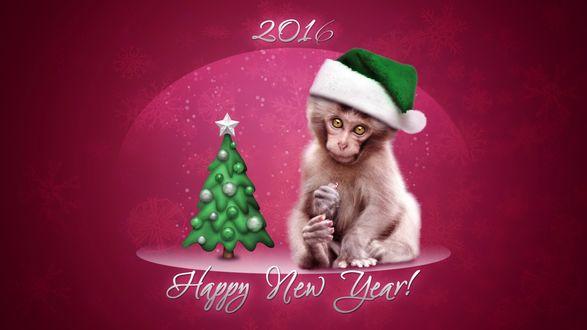 Обои Обезьянка в новогодней шапке на розовом фоне (Happy New Year!)