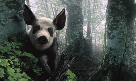 Обои Кабан среди деревьев в лесу