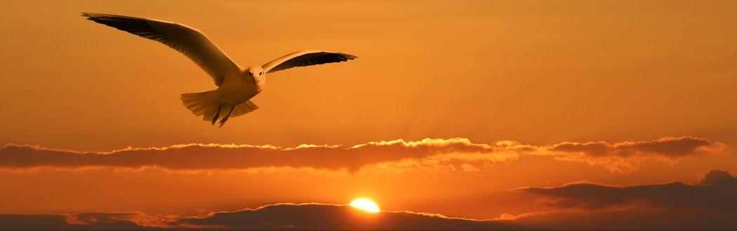 Обои Чайка в полете на фоне заката