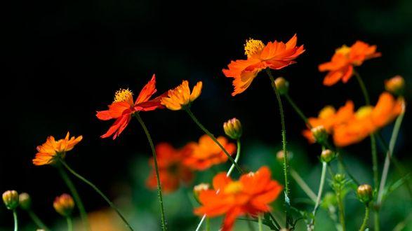 оранжевый цветочек загрузить