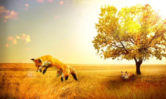 Обои Две лисы в осенней степи