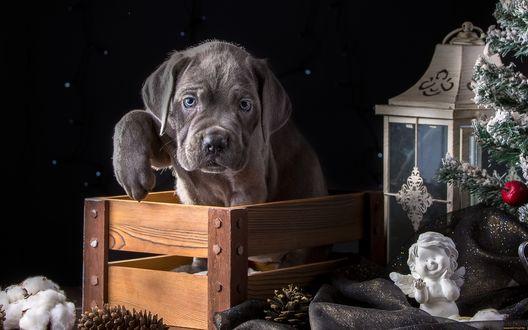 Обои Милый щенок сидит в ящике рядом с фонарем, фигуркой ангела и шишек