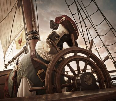 Обои Корова - капитан на корабле за штурвалом, работа Энди Махра