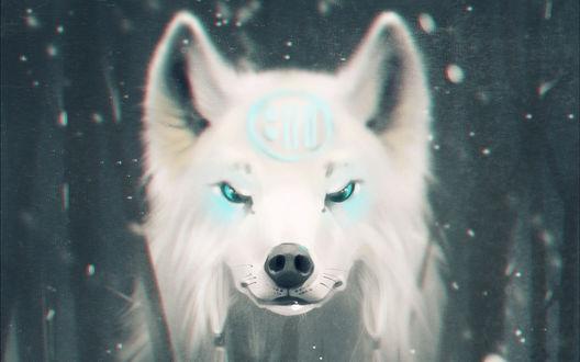 Обои Белый волк со знаком на лбу