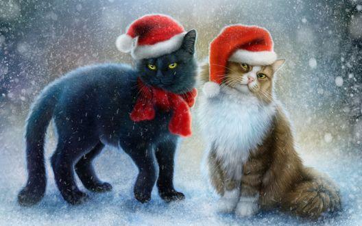 Обои Два кота в новогодних шапочках под снегопадом