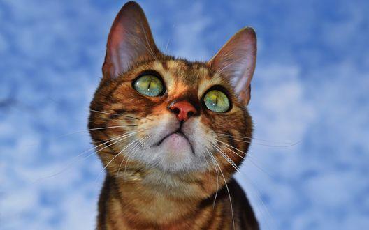 Коты смотрят вверх