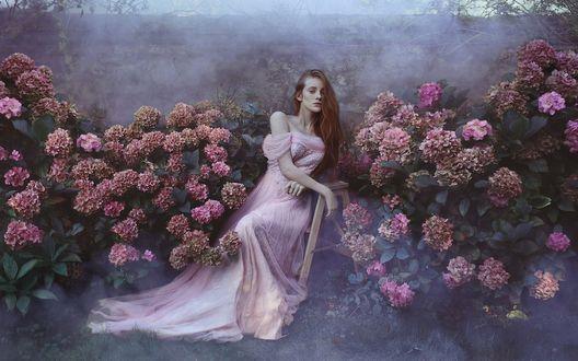 Обои Девушка в розовом платье среди кустов цветущей гортензии