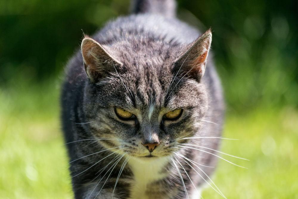 злобные коты в картинках