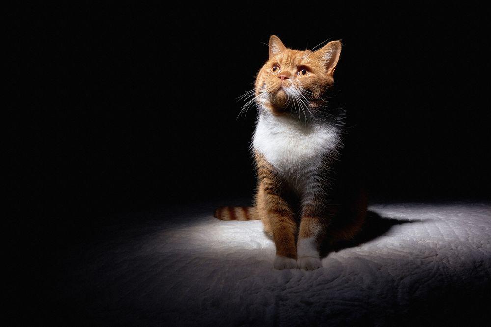 картинки котят которые смотрят вверх сосредоточены лучшие художественные
