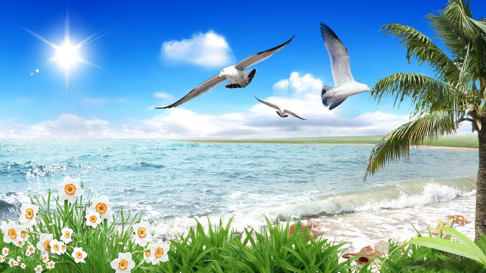 Картинки море чайки вертикальные