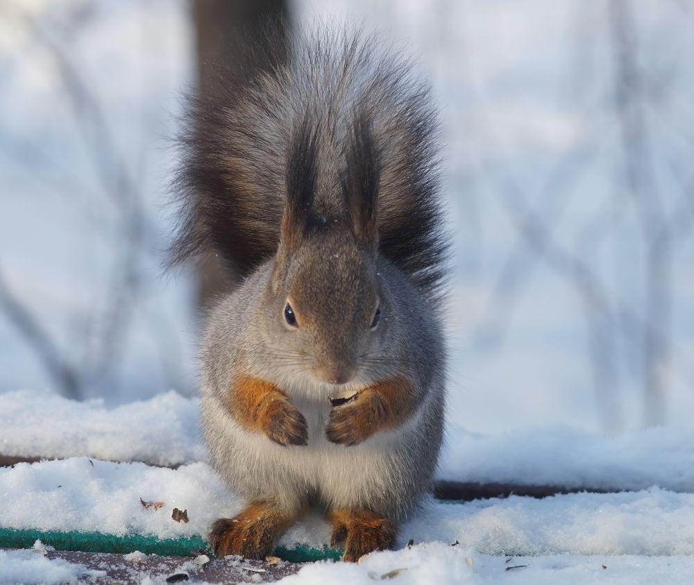 этом фото белки в зимнем лесу поговорим переводчиках