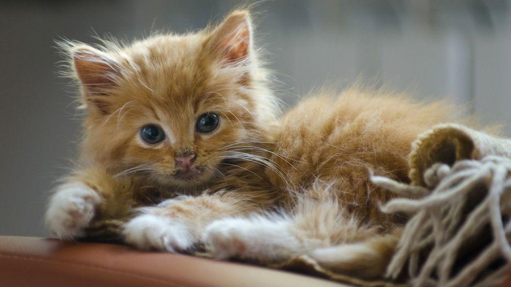 Анимации, картинки с котятами рыжими