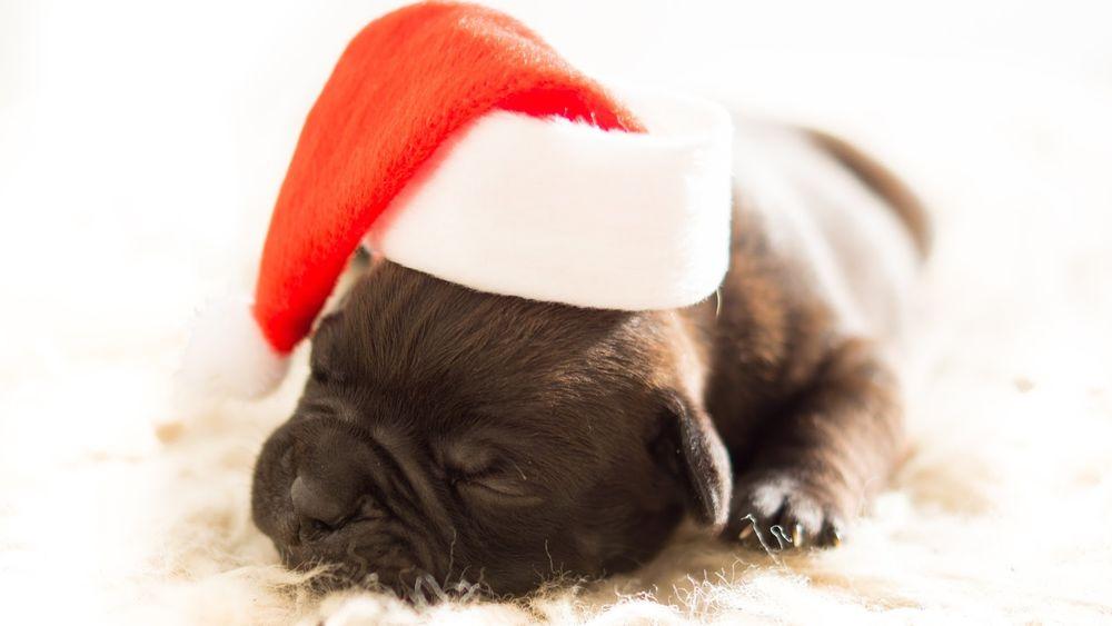 Когда снится черный щенок