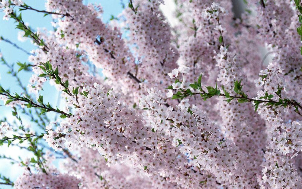 Картинка на рабочий стол весенние цветы, приглашение