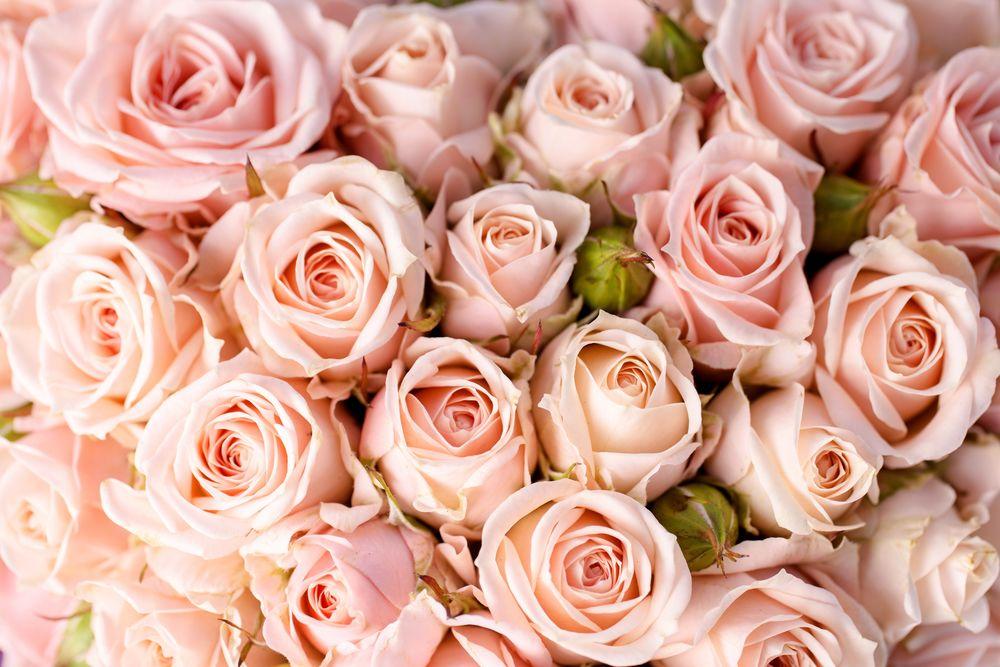 Обои для рабочего стола розы