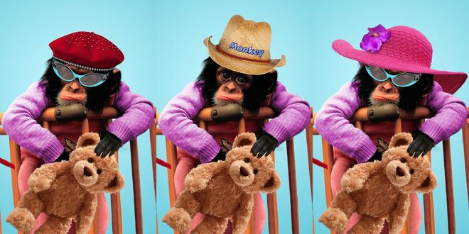 Обои Три обезьяны в шляпах и берете сидят на стульях и держат игрушечных медведей