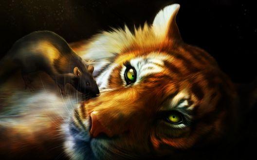 Обои Крыса сидит на морде тигра