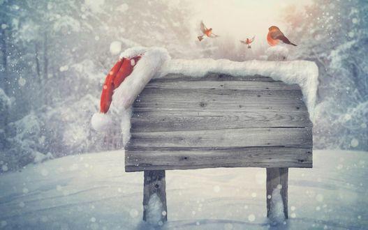 Обои Снегири в зимнем лесу, один сидит на деревянной табличке, на ней лежит шапка