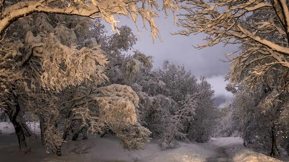 Обои Среди заснеженных деревьев в лесу, на фоне мрачного неба проходит дорога